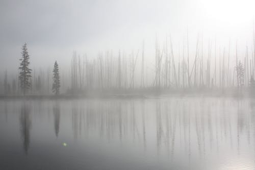 Grayscale Photo of a Placid Lake