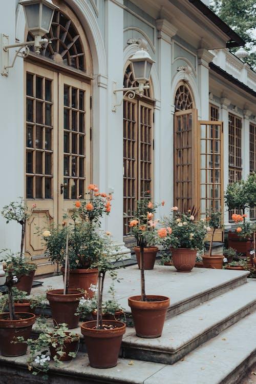 Kostnadsfri bild av arkitektur, blomkruka, blomma, byggnad
