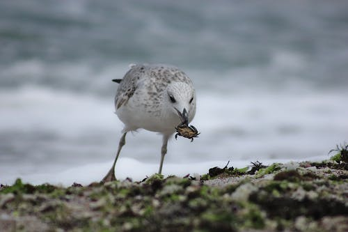 Close-Up View of a White Bird Eating a Small Crab