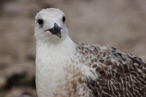 Close-Up View of a Bird