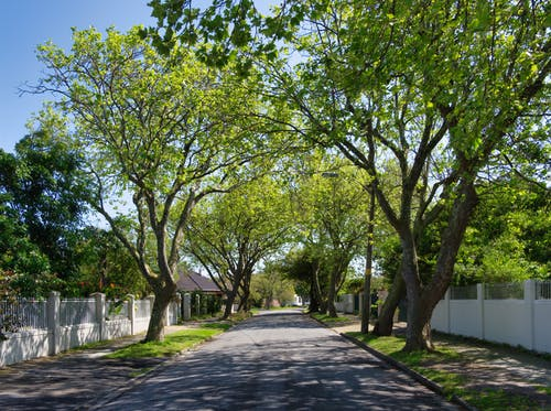 Free stock photo of alley, avenue, foliage