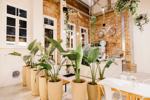 Potted plants in stylish loft flat