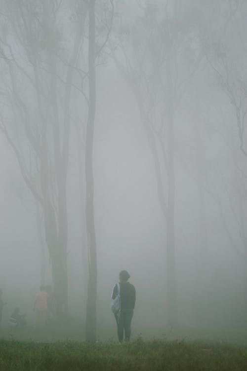 People walking in gloomy nasty forest