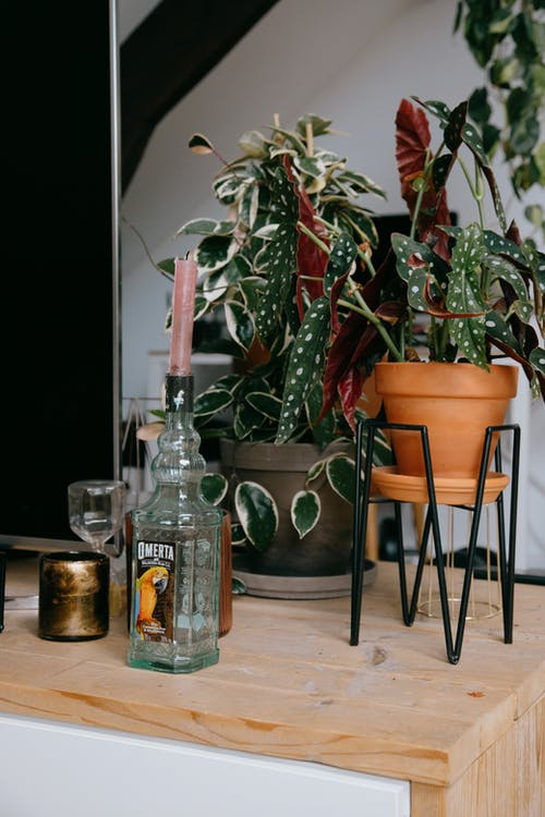 Gratis stockfoto met appartement, arrangement, binnenshuis, bloem