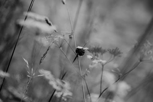 Delicate flower in blooming summer field