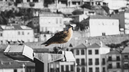 Free stock photo of black and white city, seagull