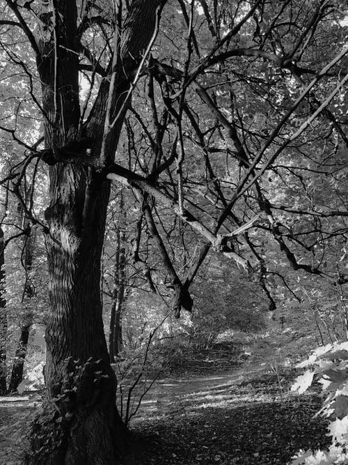Black and white of tall leafless tree growing on rural road with fallen leaves in countryside in nature in daytime