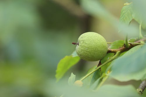 Macro Photography of a Green Fruit