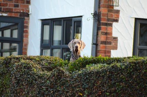 Fotos de stock gratuitas de adorable, animal, canino