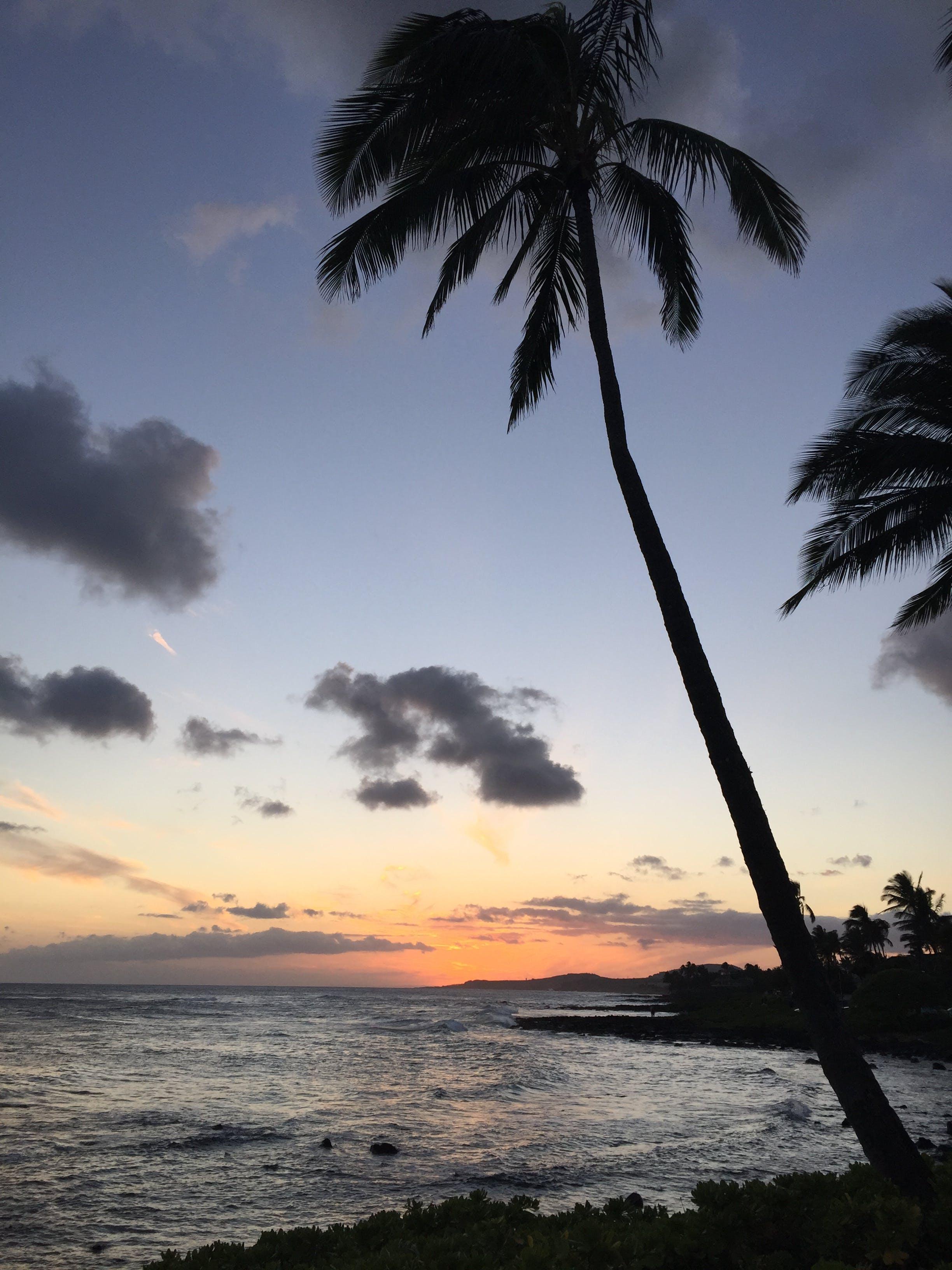 Coconut Palm Tree Near Ocean during Sunrise
