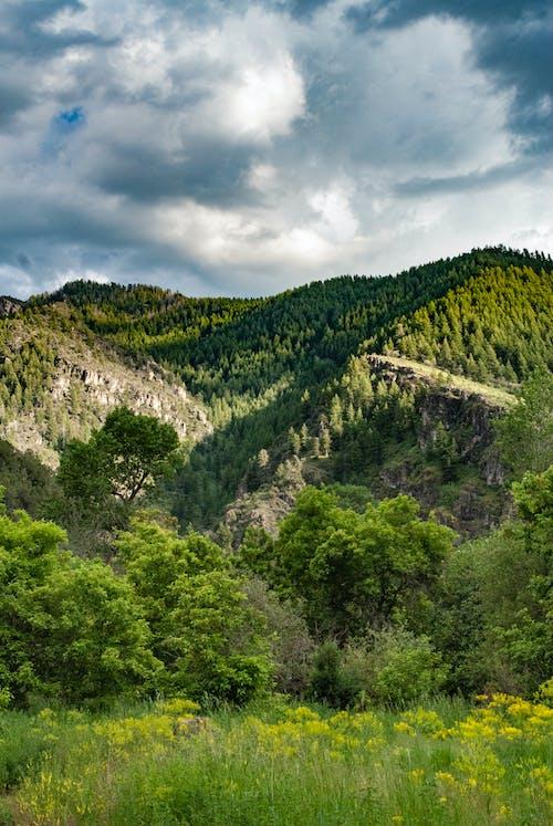 Kostenloses Stock Foto zu außerorts, bäume, berg