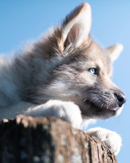 Close-Up Photo of a Cute Dog