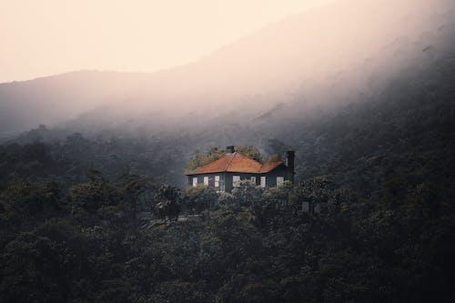 Základová fotografie zdarma na téma bujný, čerstvý, chata, destinace