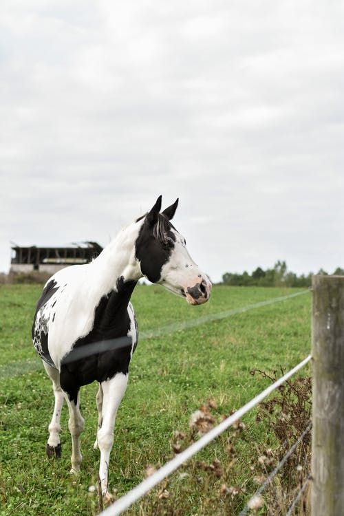 A Black and White Horse on Pastoral Land