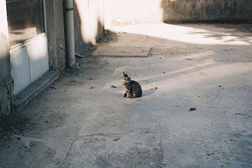 Cute Cat on Gray Concrete Floor