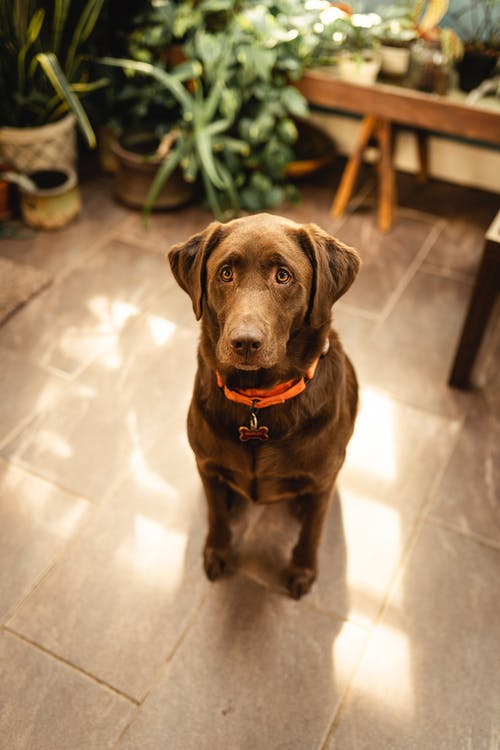 Shallow Focus Photo of a Cute Brown Dog