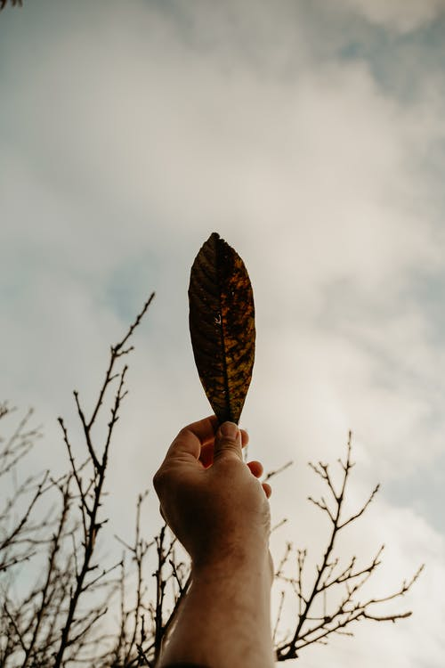 From below of crop person hand holding leaf against leafless trees and cloudy sky