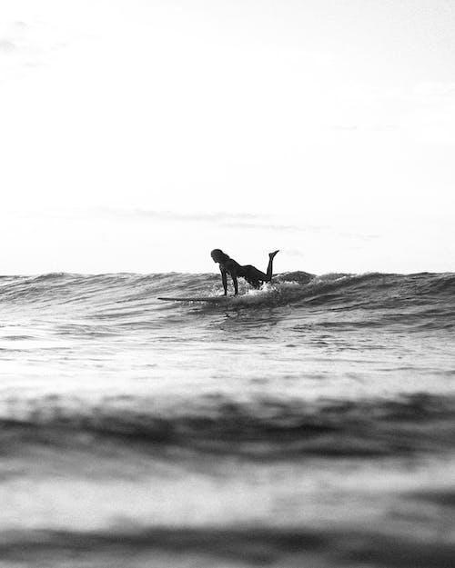 Photos gratuites de action, bord de mer, côte, coucher de soleil