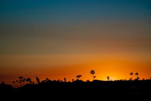 Photos gratuites de ciel orange, cocotiers, coucher de soleil