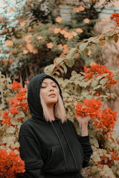 Immagine gratuita di arbusto, armonia, aroma