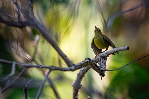 Shallow Focus Photo of a Green Bird Perched on Tree Branch