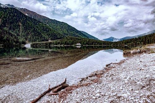 Photos gratuites de arbres, bois, bord de lac, cailloux