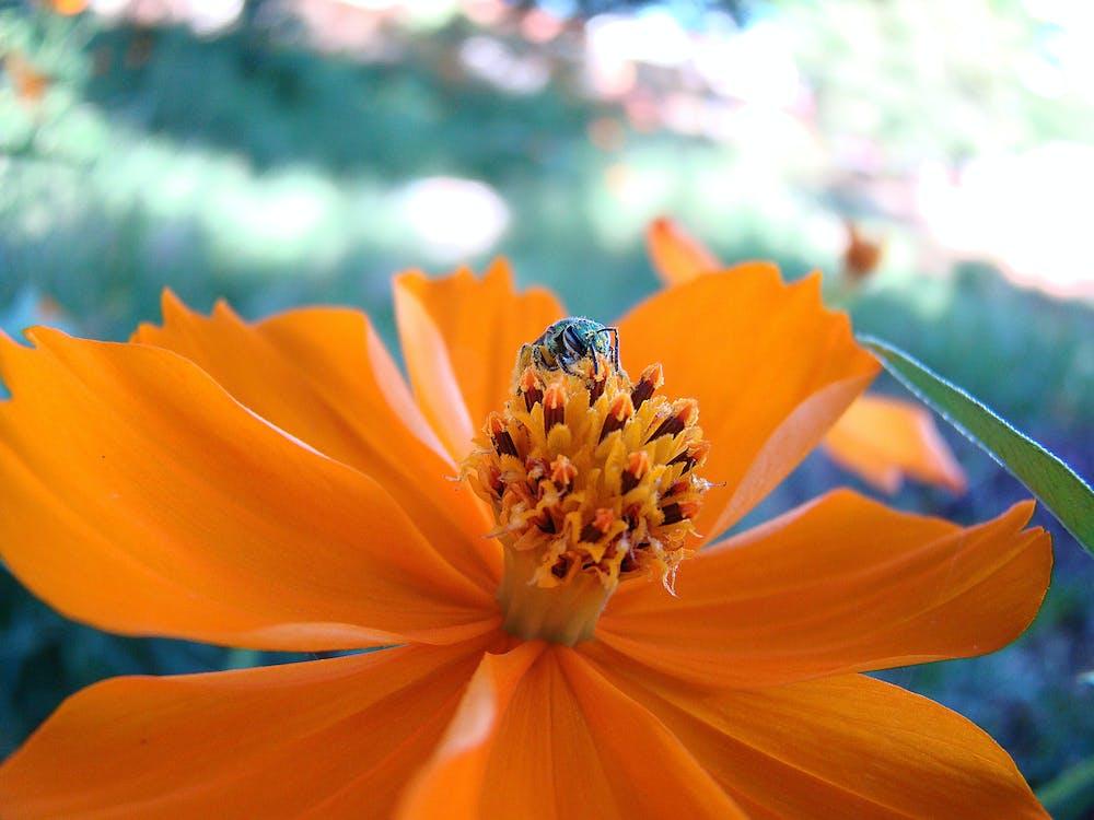 Free stock photo of abelha, flores