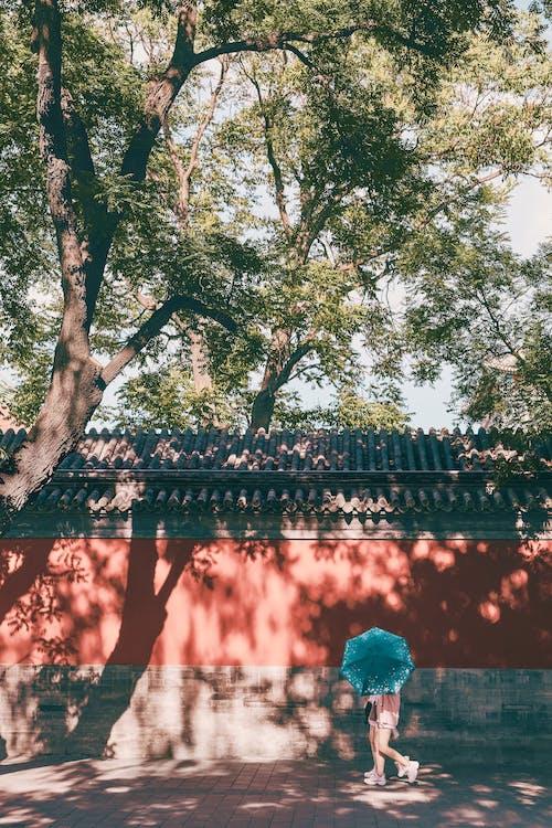 Бесплатное стоковое фото с Взрослый, дерево, женщина, живой цвет
