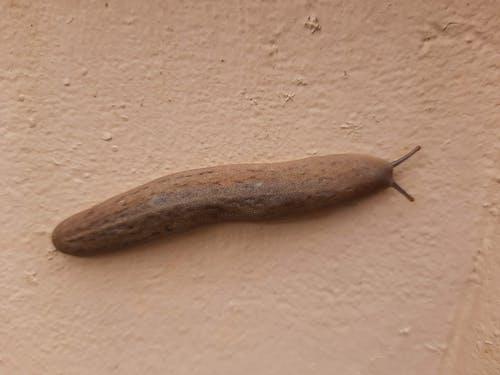 Free stock photo of #slug