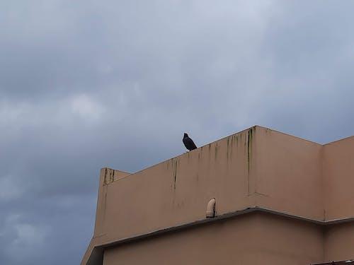 Free stock photo of #bird, #crow