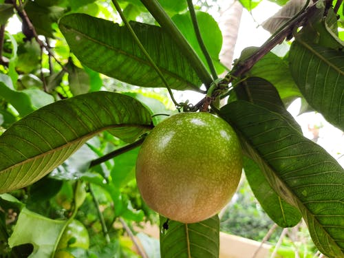 Free stock photo of #fruit