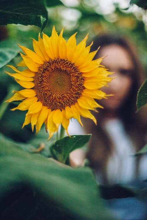 Unrecognizable woman behind bright blooming sunflower in garden