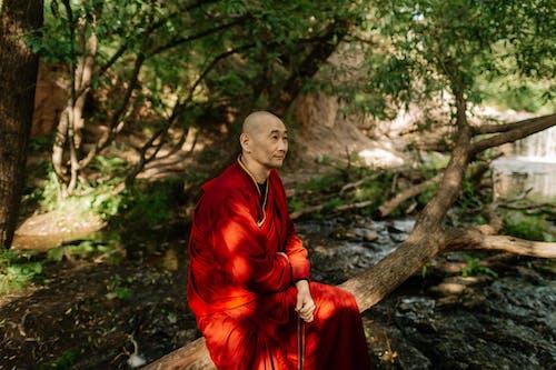 Photos gratuites de adulte, aîné, arbre, Asiatique