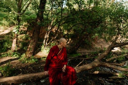 Photos gratuites de arbre, automne, bois, bouddha