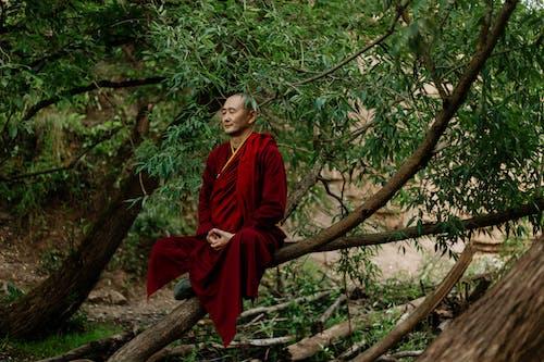 Photos gratuites de adulte, arbre, Asiatique, bois