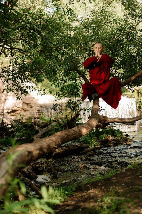 Photos gratuites de adulte, arbre, Asiatique, automne