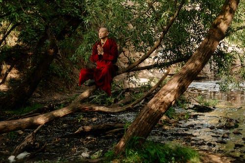 Photos gratuites de arbre, Asiatique, automne, bois
