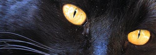 Základová fotografie zdarma na téma kočka, kočky oči, žluté oči