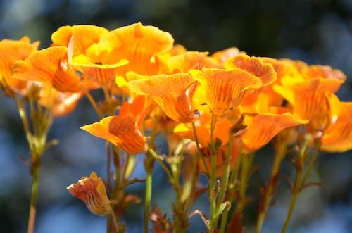 オレンジの花の無料の写真素材