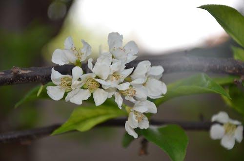 春の花の花の無料の写真素材