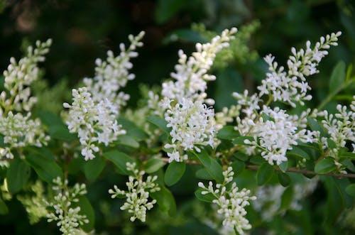 春の花の無料の写真素材