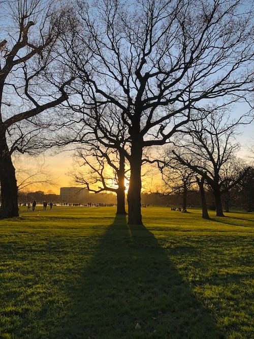 Free stock photo of beautiful sunset, kensington, london