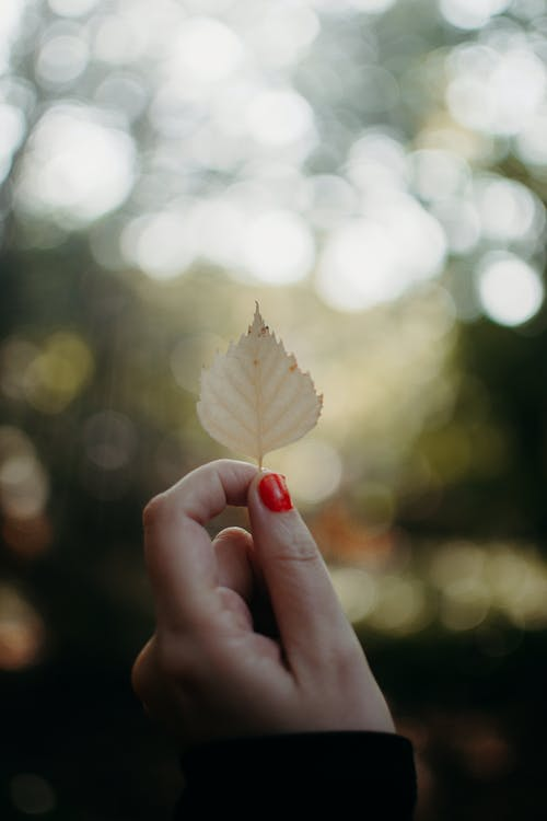 Person Holding White Leaf