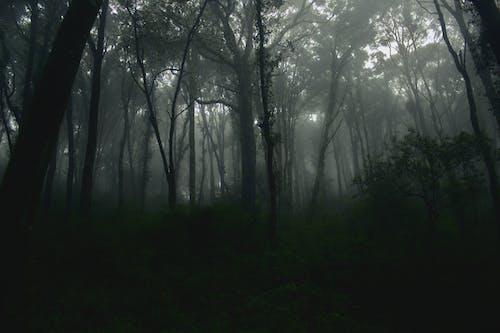 Foto profissional grátis de ao ar livre, arrepiante, árvores