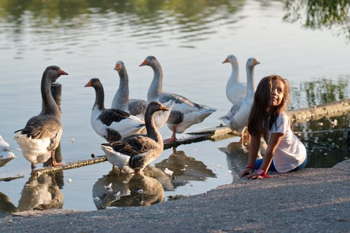 Free stock photo of birds, child, geese, lake