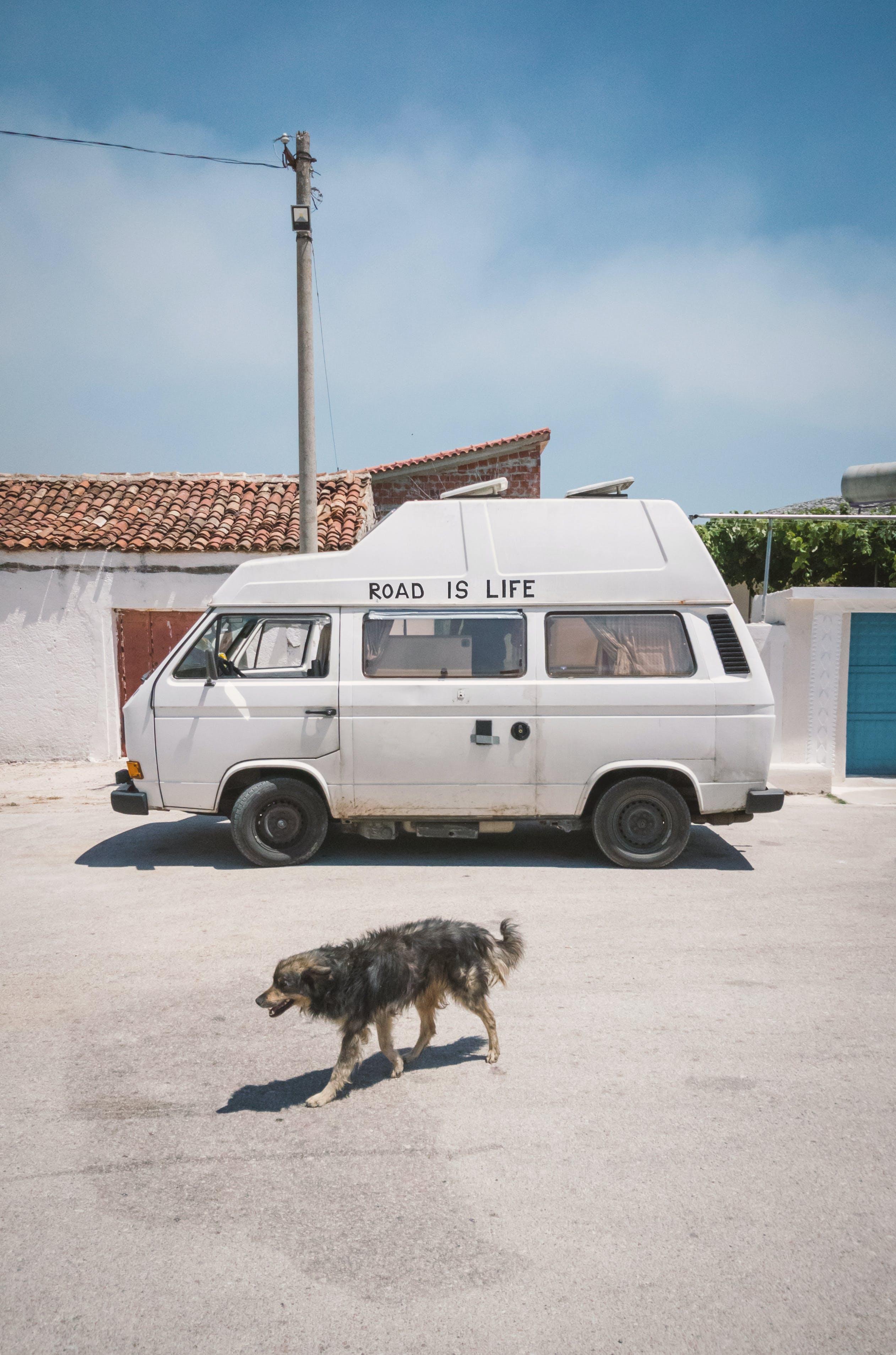 Gratis lagerfoto af bil, folkevogn, gade, hund