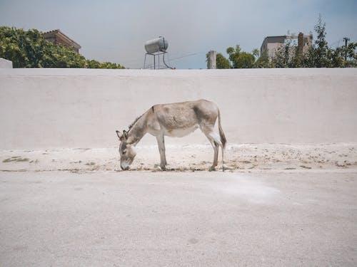 Fotobanka sbezplatnými fotkami na tému somár, ulica, zviera