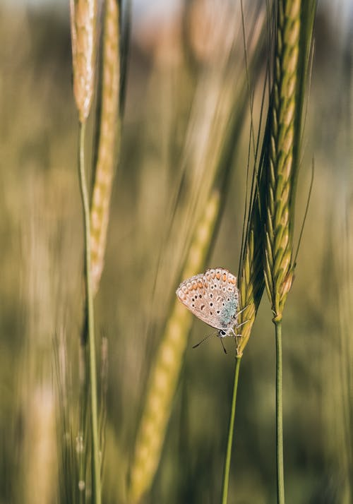 Butterfly with ornamental wings and long antennae sitting on green spike in field in summer