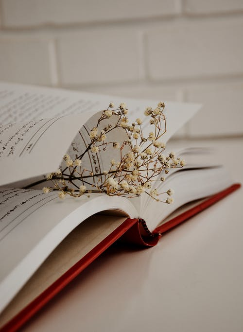Thin sprig with small dried flowers between pages of open textbook on table near white brick wall