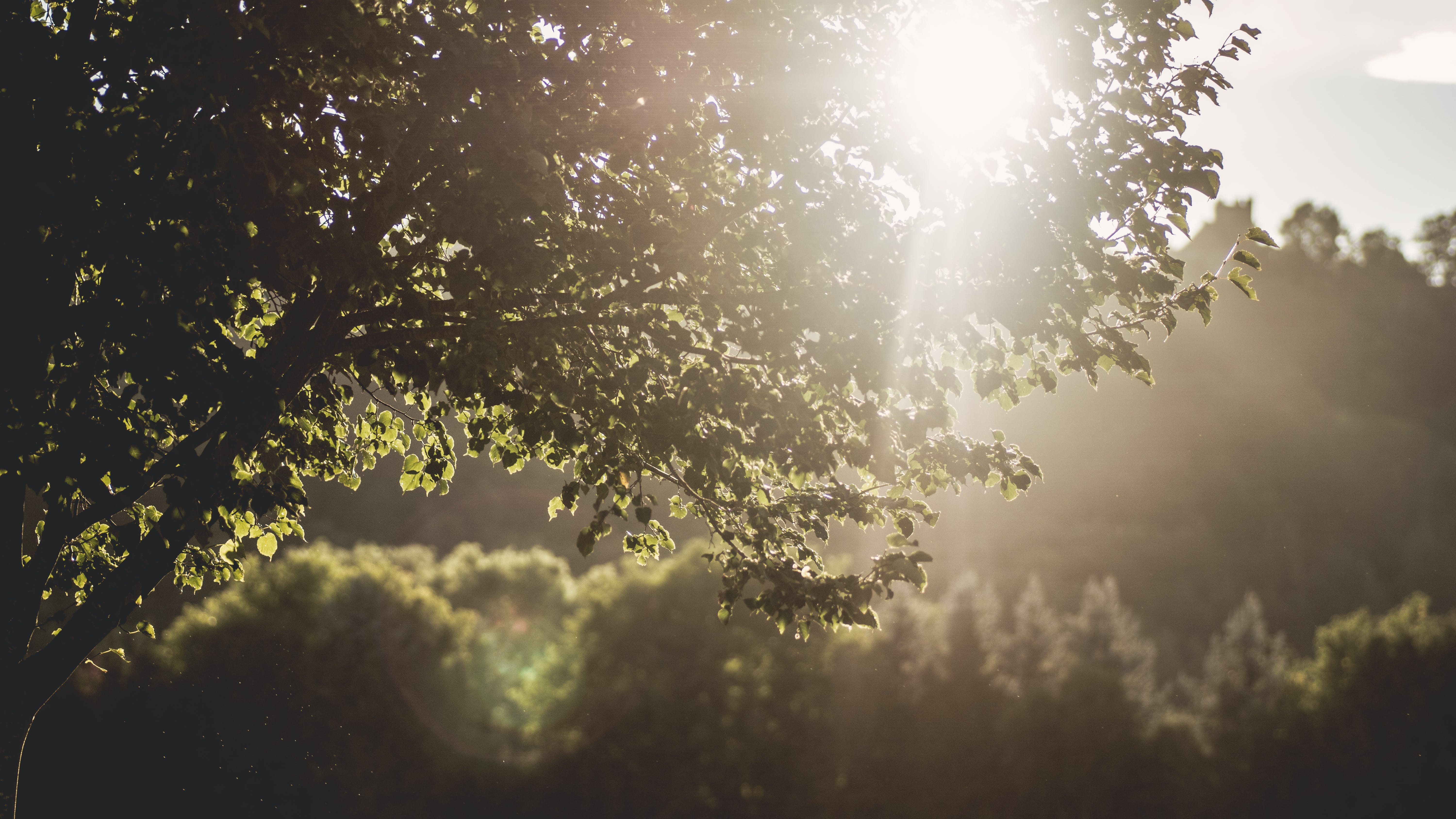 Free stock photo of nature, sun, forest, trees